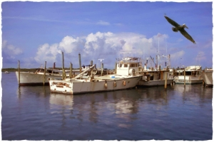 View From the Dock - Cortez Fishing Village, Cortez, Florida